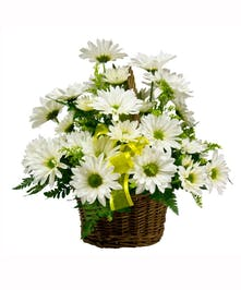 White daisy flowers in a woven basket.