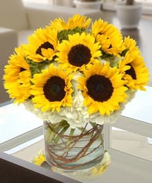 Sunflowers and hydrangea in a chic cylinder vase with curly willow accents.