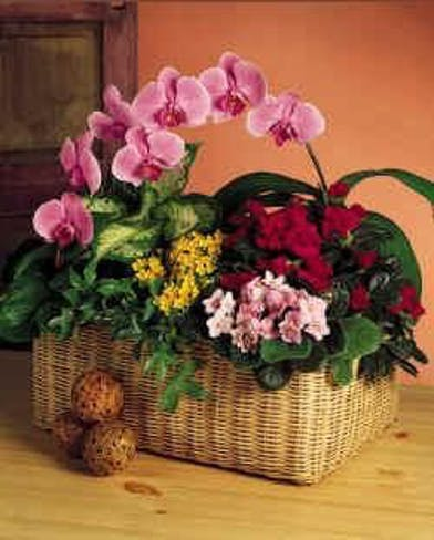 Pink orchids and other assorted flowers in a woven basket.