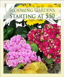Image of flower arrangements with text that says: Blooming Gardens Starting at $50.