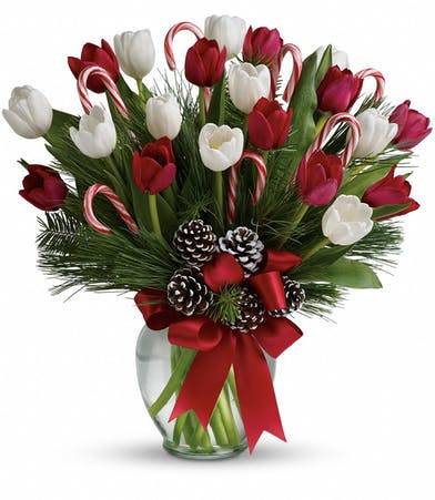 Red and white holiday tulips with candy canes and frosted pine cones
