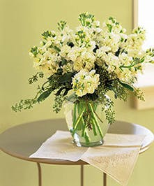 White stock with seeded eucalyptus in a glass vase.